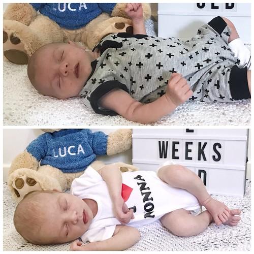 Luca - 2 weeks comparison