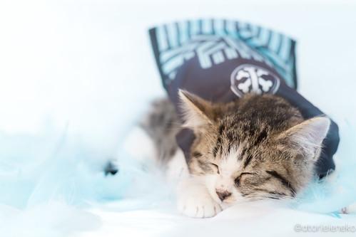 アトリエイエネコ Cat Photographer 38765711412_37c680c307 1日1猫!おおさかねこ倶楽部 里親様募集中のサンマ君です♬ 1日1猫!  里親様募集中 猫写真 猫 子猫 大阪 写真 保護猫 ニャンとぴあ スマホ カメラ おおさかねこ倶楽部 Kitten Cute cat