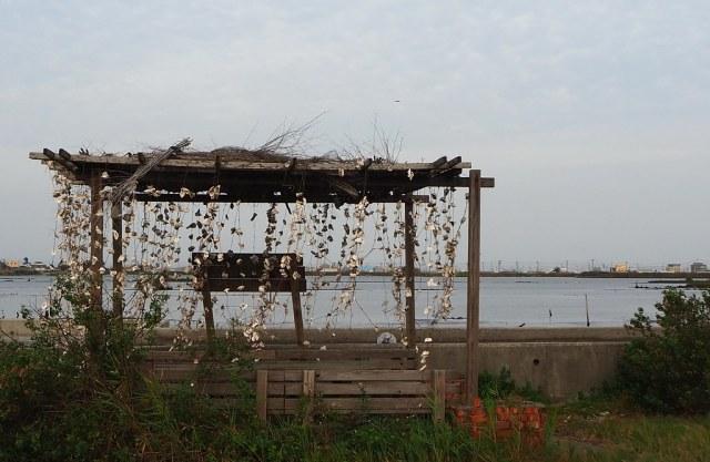 口湖成龍濕地 (11)