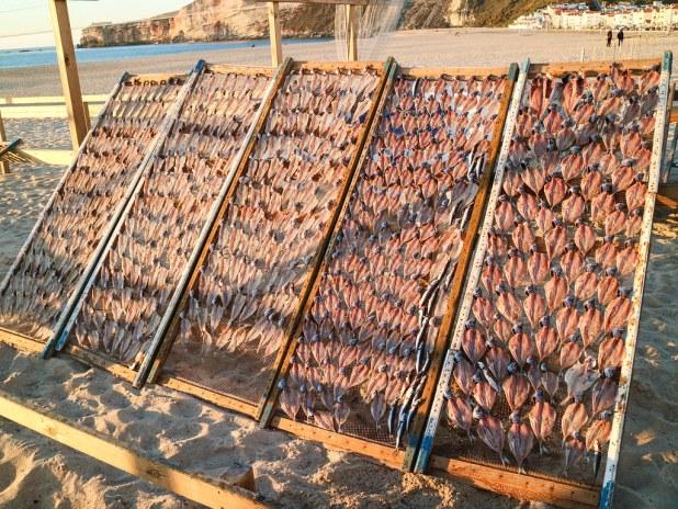 Pescado al sol en Nazaré
