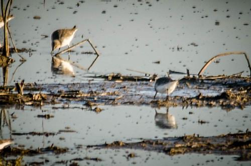 Skagit Birds and Sunset-13