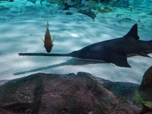 Ripley's Aquarium of Myrtle Beach Review