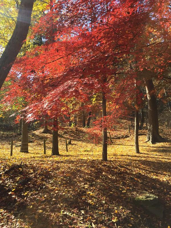 가을생각 #1