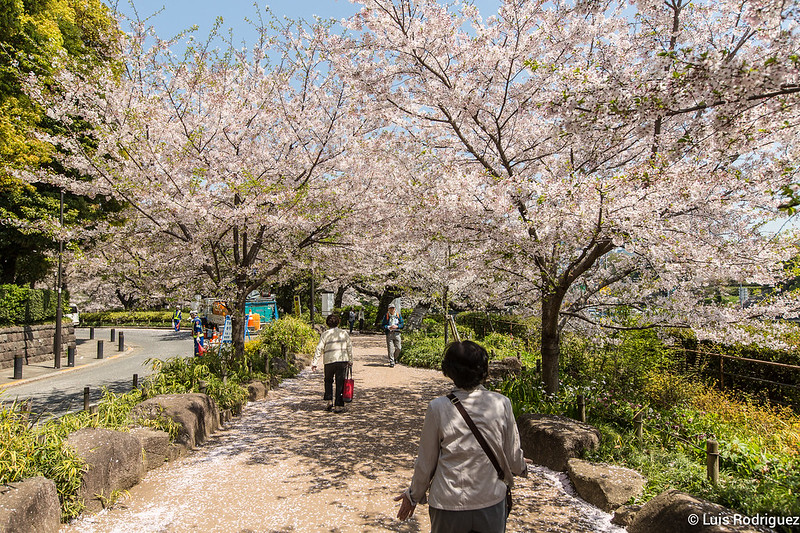 Sakura-Chidori-ga-Fuchi-Palacio-Imperial-26