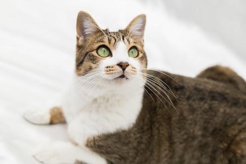 アトリエイエネコ Cat Photographer 38973960681_5ee936e7bd 保護猫カフェ&猫ホテル ねこんチ