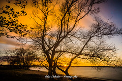golden november evening
