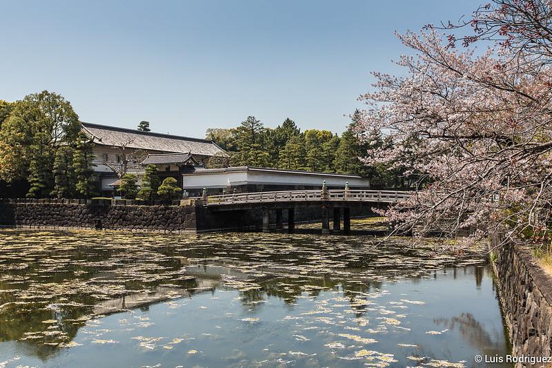 Sakura-Chidori-ga-Fuchi-Palacio-Imperial-2