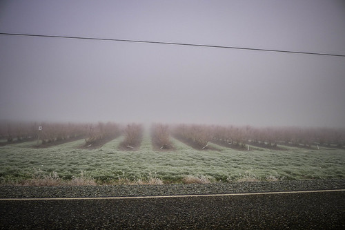 Skagit Valley Fog-002