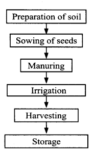 ncert-solutions-for-class-8-science-crop-production-and-management-3-1