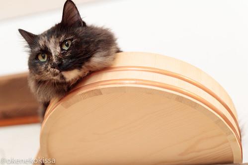 アトリエイエネコ Cat Photographer 38509554095_92e4a7fcb3 保護猫譲渡カフェ 和風桶猫喫茶 with ラブファイブ
