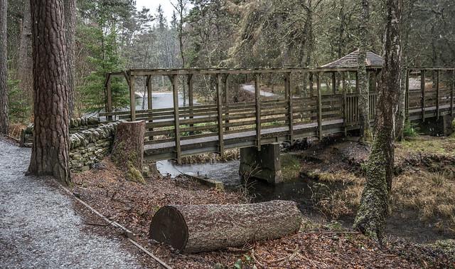 Còsagach at Faskally Wood, Pitlochry
