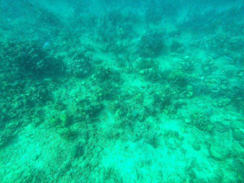 Isola Catalina