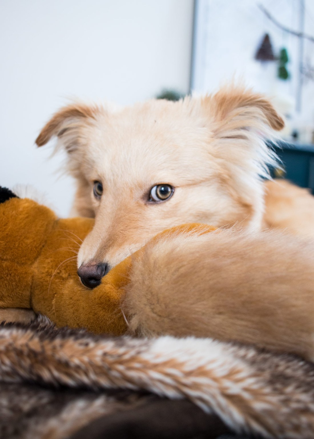 Nellie-Chewing-Fox-Toy