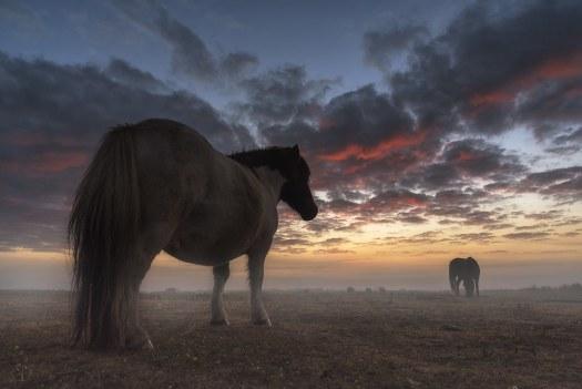 Pony at sunrise...