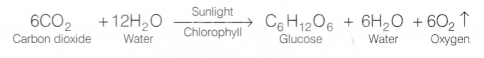 cbse-class-10-science-lab-manual-light-is-necessary-for-photosynthesis-1