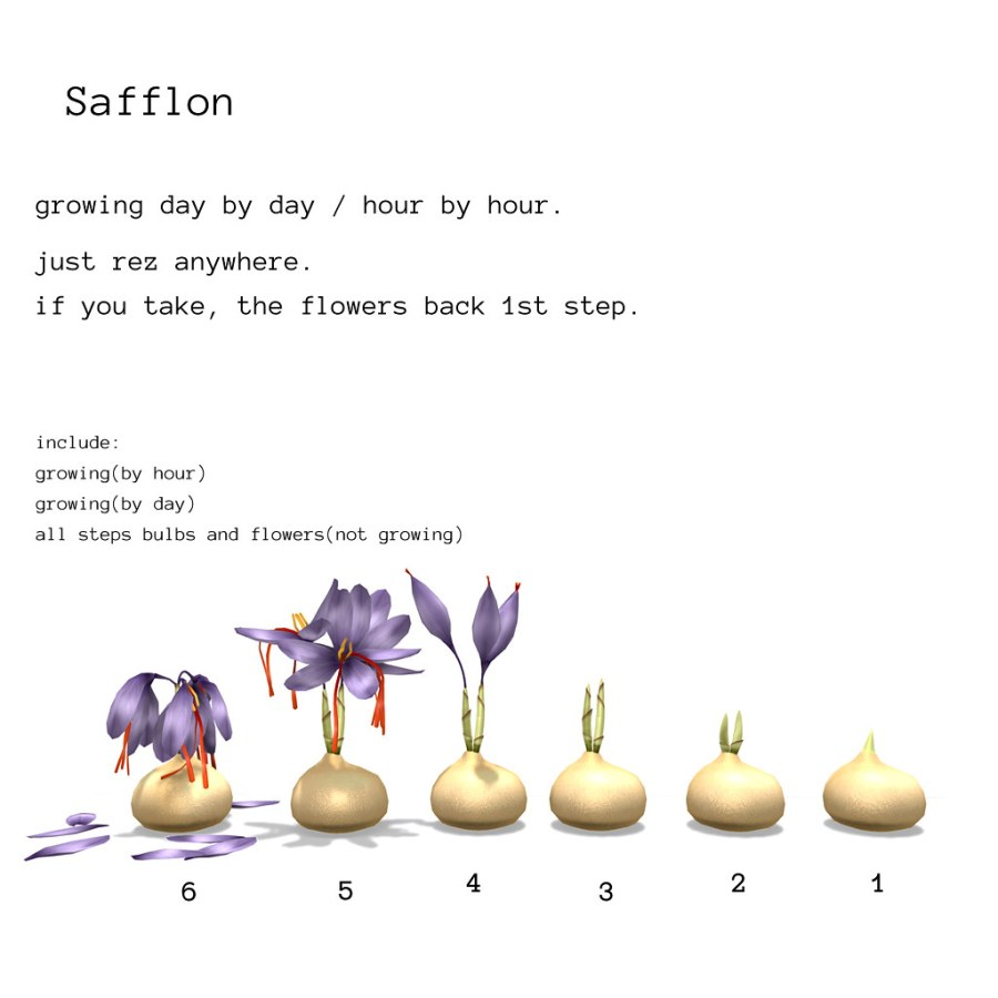 *NAMINOKE*Safflon Growing flower