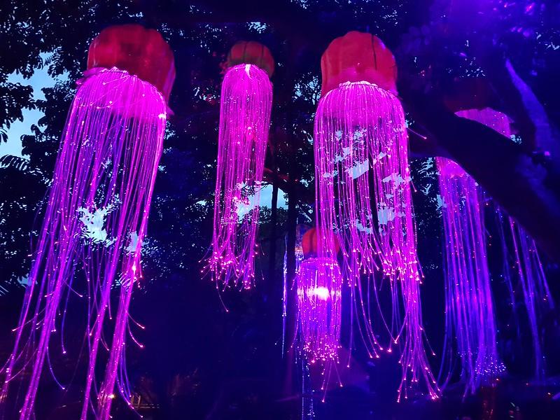 Lights of Aiyana
