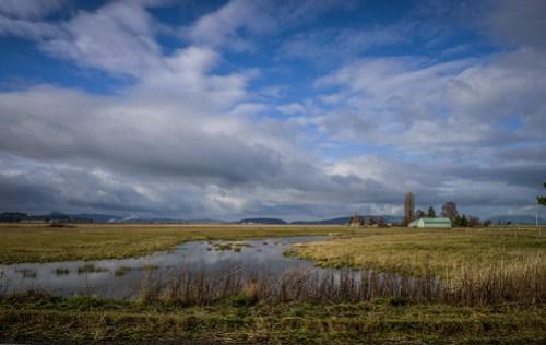 Skagit Valley Flooded Fields-001