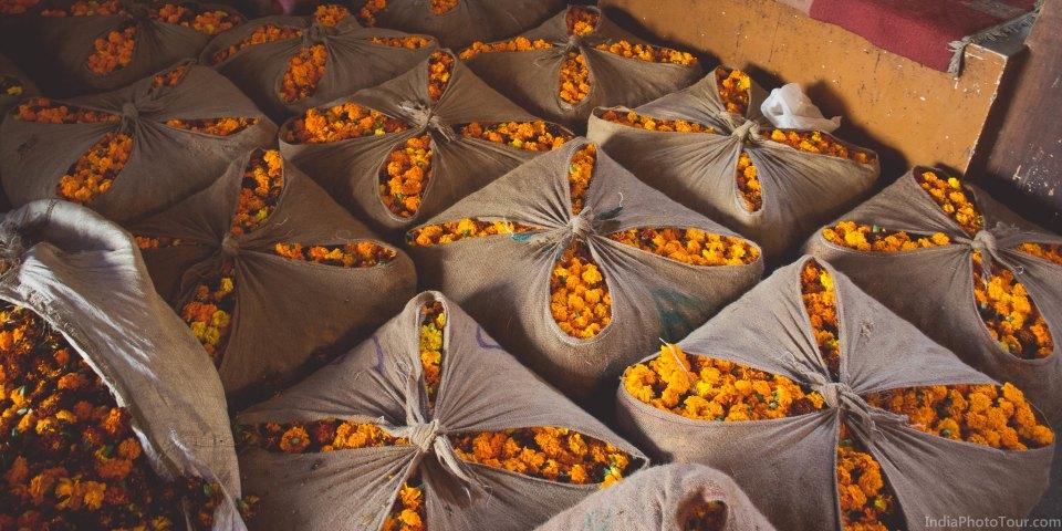 Visiting Old Delhi's small flower market