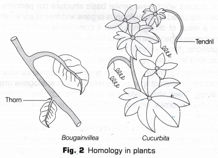 Cbse Class 10 Science Lab Manual Homology And Analogy Of Plants