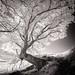Variation autour d'un arbre #8