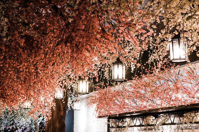 Cherry Blossom PUB-7