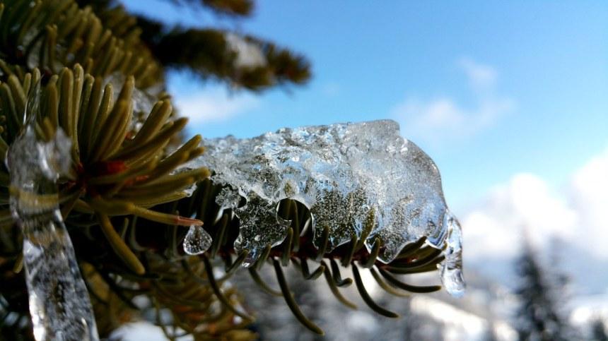 Alien de glace sur un sapin