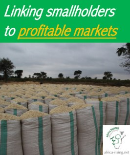Linking smallholder maize/legume farmer groups with profitable markets.