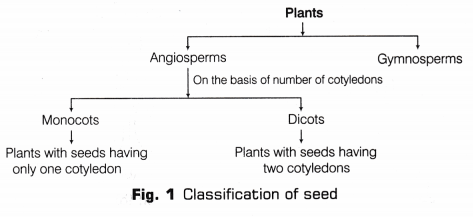 cbse-class-10-science-lab-manual-dicot-seed-1