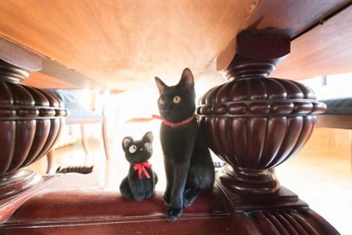 アトリエイエネコ Cat Photographer 39078642834_24189db890 1日1猫!CaraCatCafe 里親募集中の黒猫マックくん 1日1猫!  黒猫 里親様募集中 箕面 猫写真 猫 子猫 大阪 写真 保護猫カフェ 保護猫 スマホ カメラ Kitten Cute cat caracatcafe
