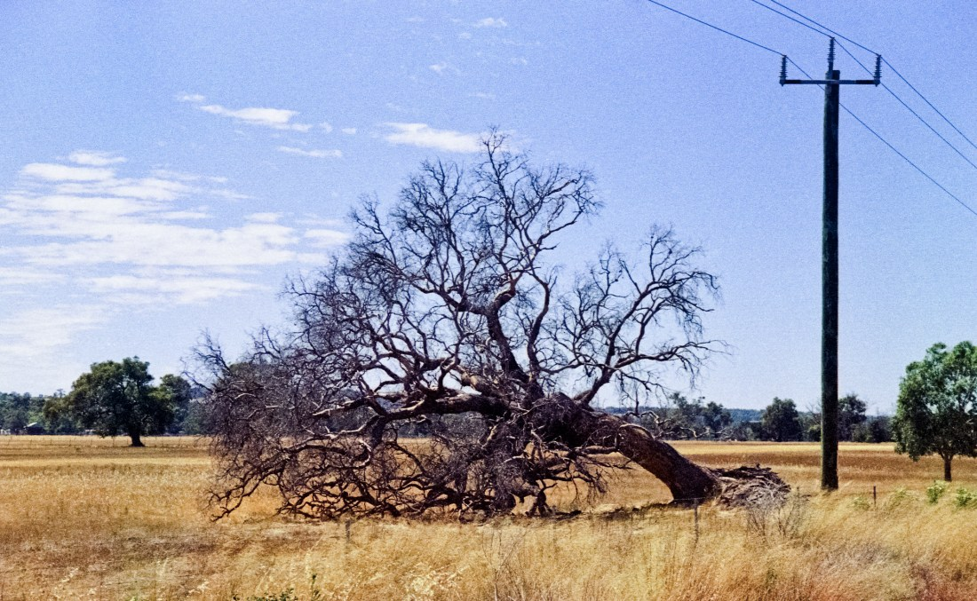 Dry fields, twisted trees and powerlines...