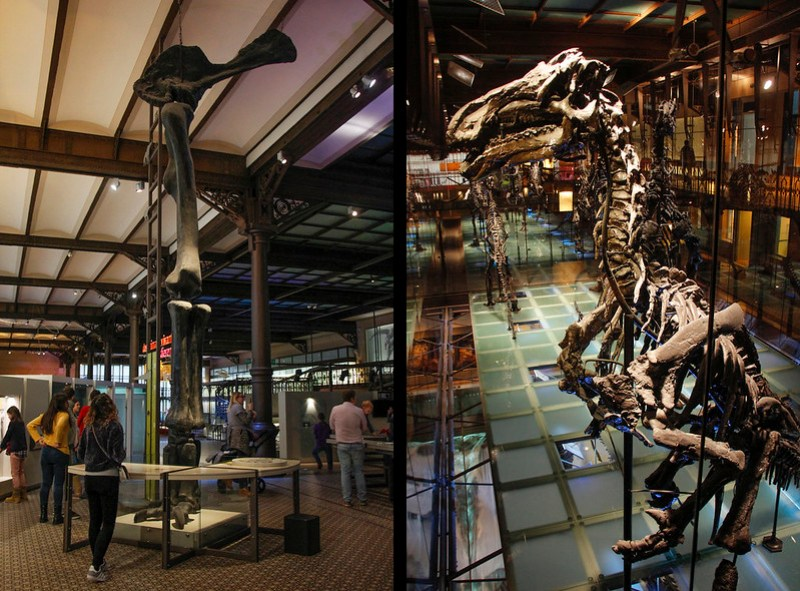 europas største dinosaurudstilling