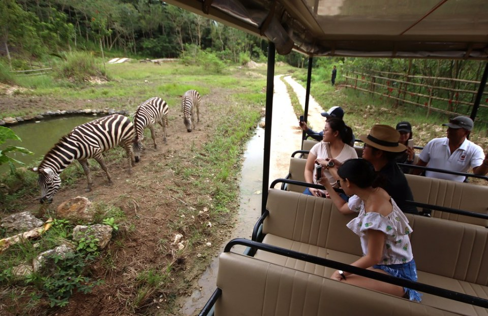 African Savannah - Cebu Safari & Adventure Park