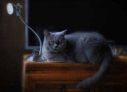 cat stories - tv blocker..