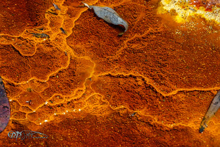 Estomatolitos del Rio Tinto. 21-04-17.