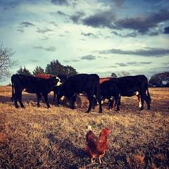 #goodfarmstuff #familyfarm #farmlife #local