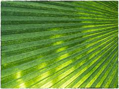 BSW18-07 - Leaf