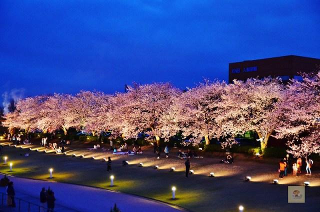 富岩運河環水公園 ,富山景點 富山必去, 富山櫻花
