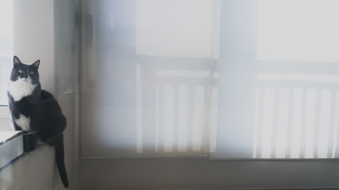 daegu // january 2018