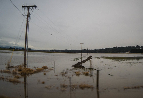 Skagit Farmland Flooding-2