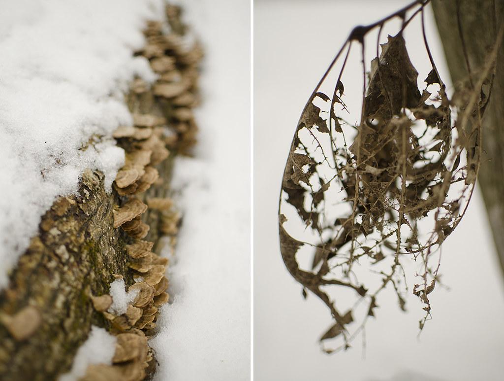 in the woods quadragesima collage