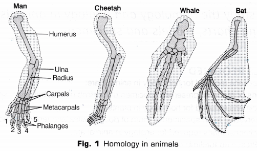 cbse-class-10-science-lab-manual-homology-analogy-plants-animals-1