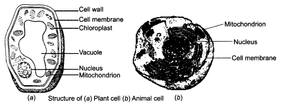 NCERT Solutions for Class 8 Science Chapter 8 Cell
