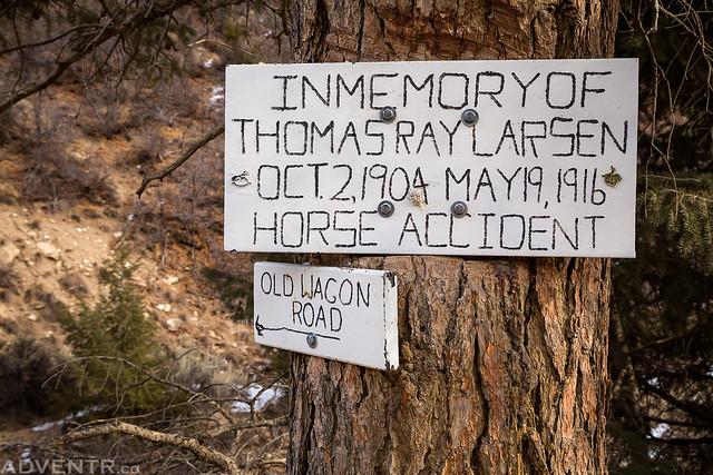 Horse Accident