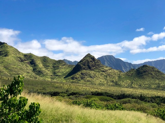Picture from the Mt. Ka'ala Trail