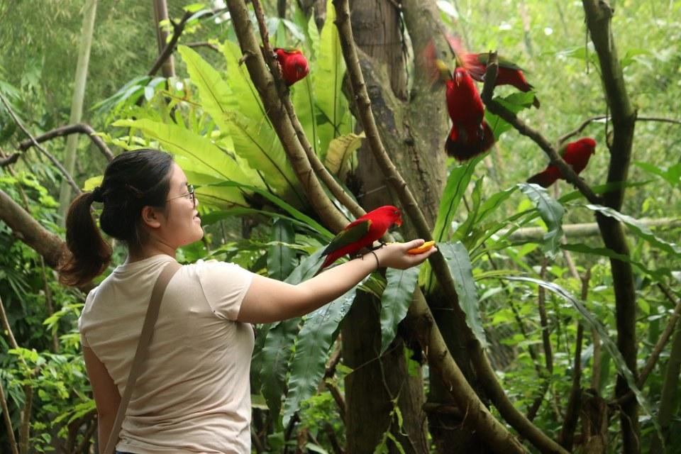 Aviary - Cebu Safari & Adventure Park