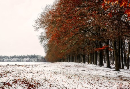 When winter meets autumn