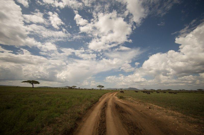 Serengeti GMC