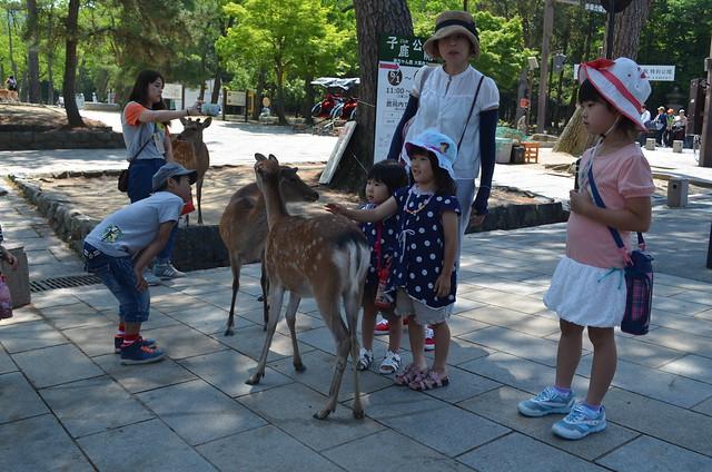 Nara, Japan: Deer Feeding and Todaiji Temple
