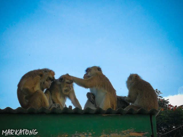 Lake Agco + New Israel Monkey
